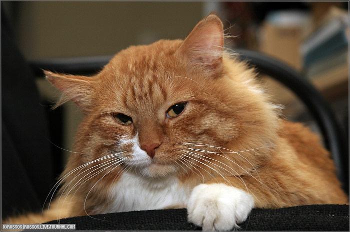 http://www.russos.ru/img/cats/filya/filya-11.jpg